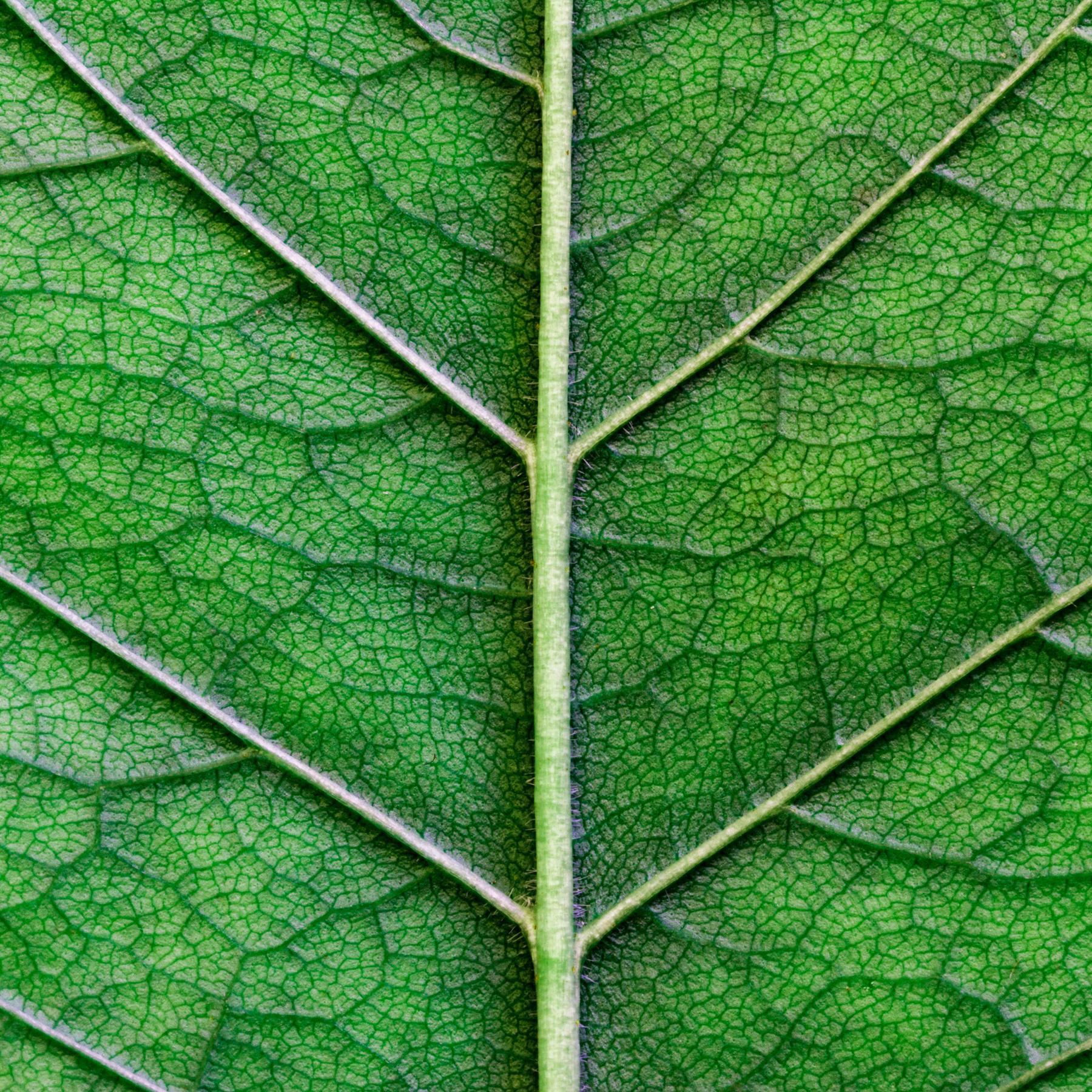Photosynthese - Das wundersame Pflanzenkraftwerk