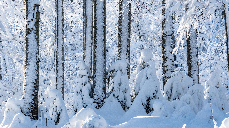 Dichter Schnee im Bayerischen Wald (Symbolbild)