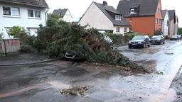 Ein Baum ist aus einem Vorgarten heraus auf ein parkendes Auto gestürzt | Bild:BR