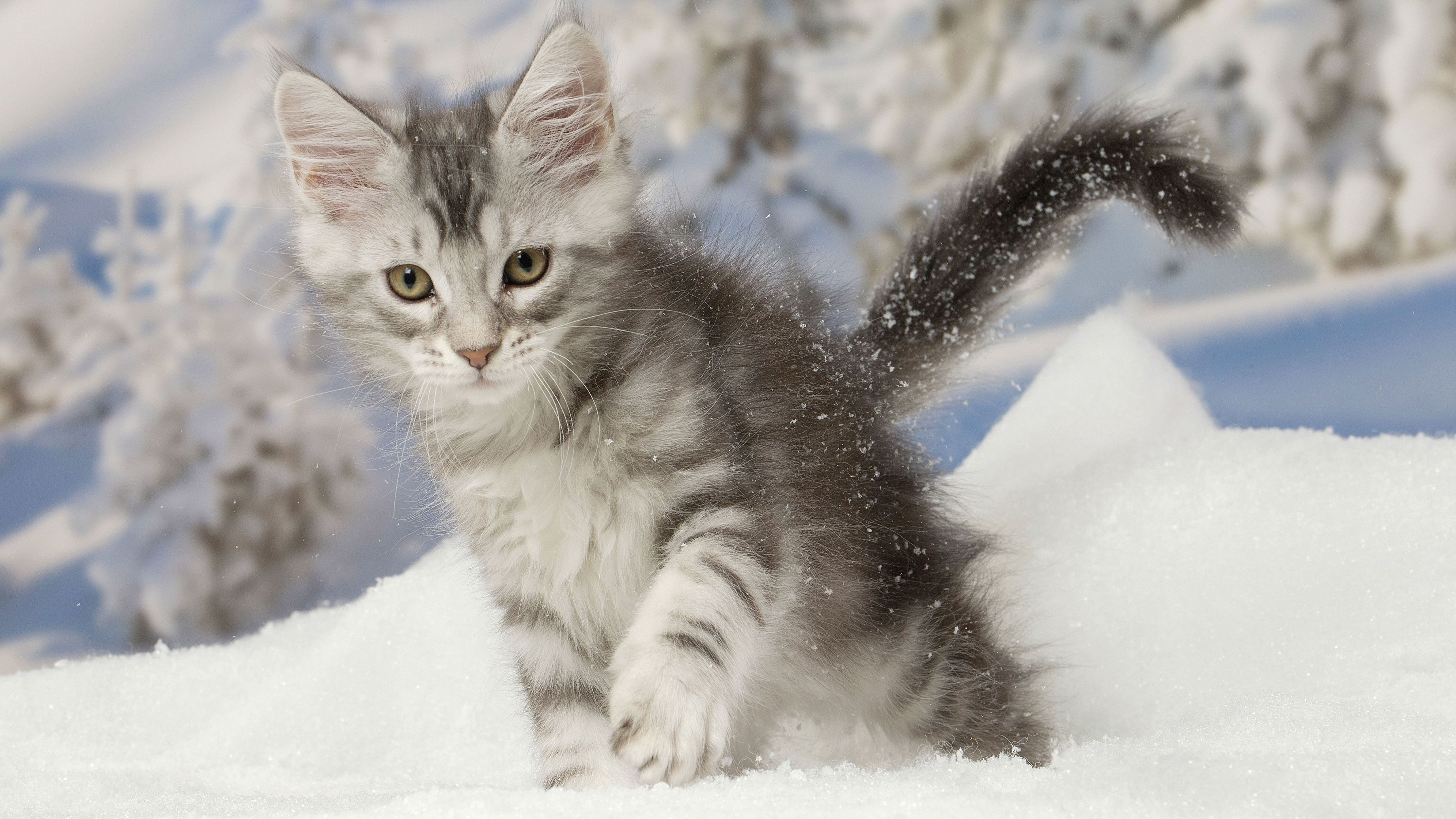 Katze im Schnee (Symbolbild)