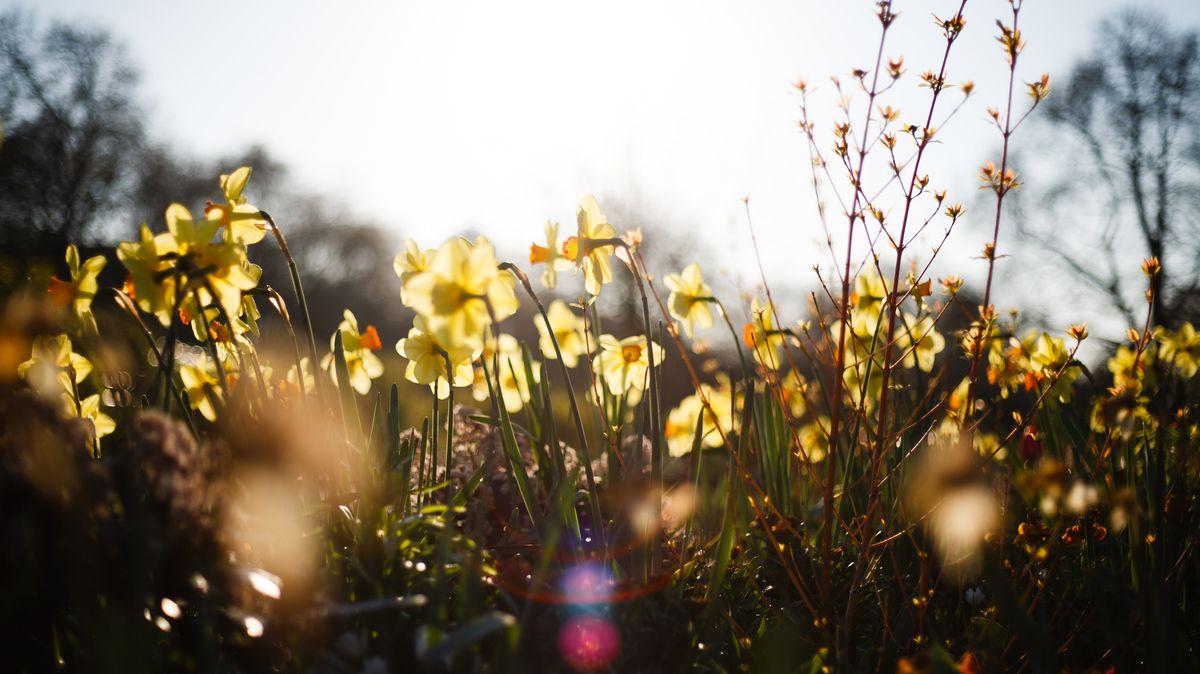 Frühlingsblumen im Sonnenschein.