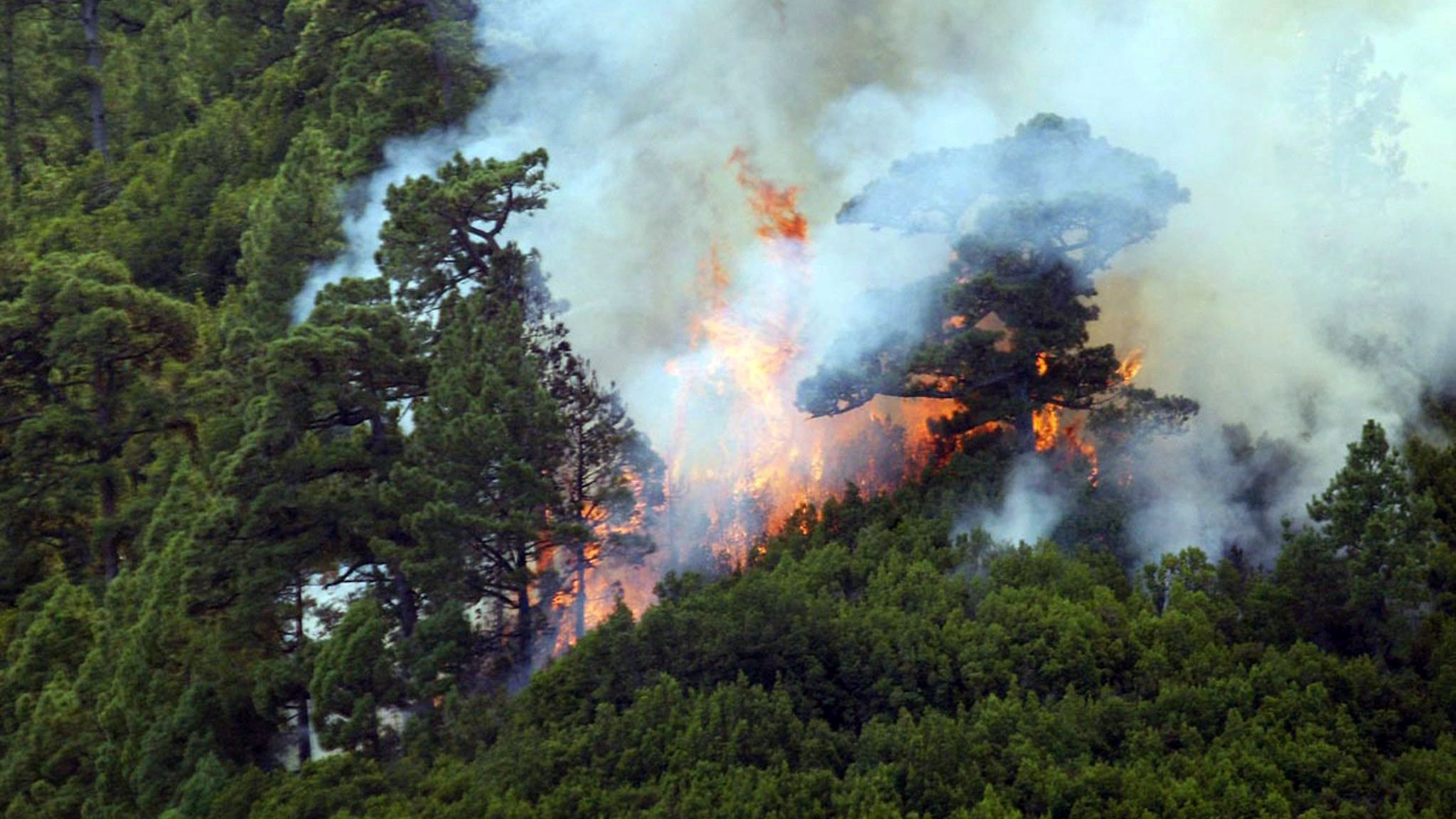 Waldbrand auf Gran Canaria (Symbolbild)