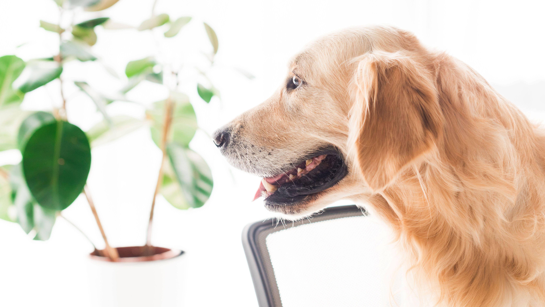 Hund mit Gummibaum.