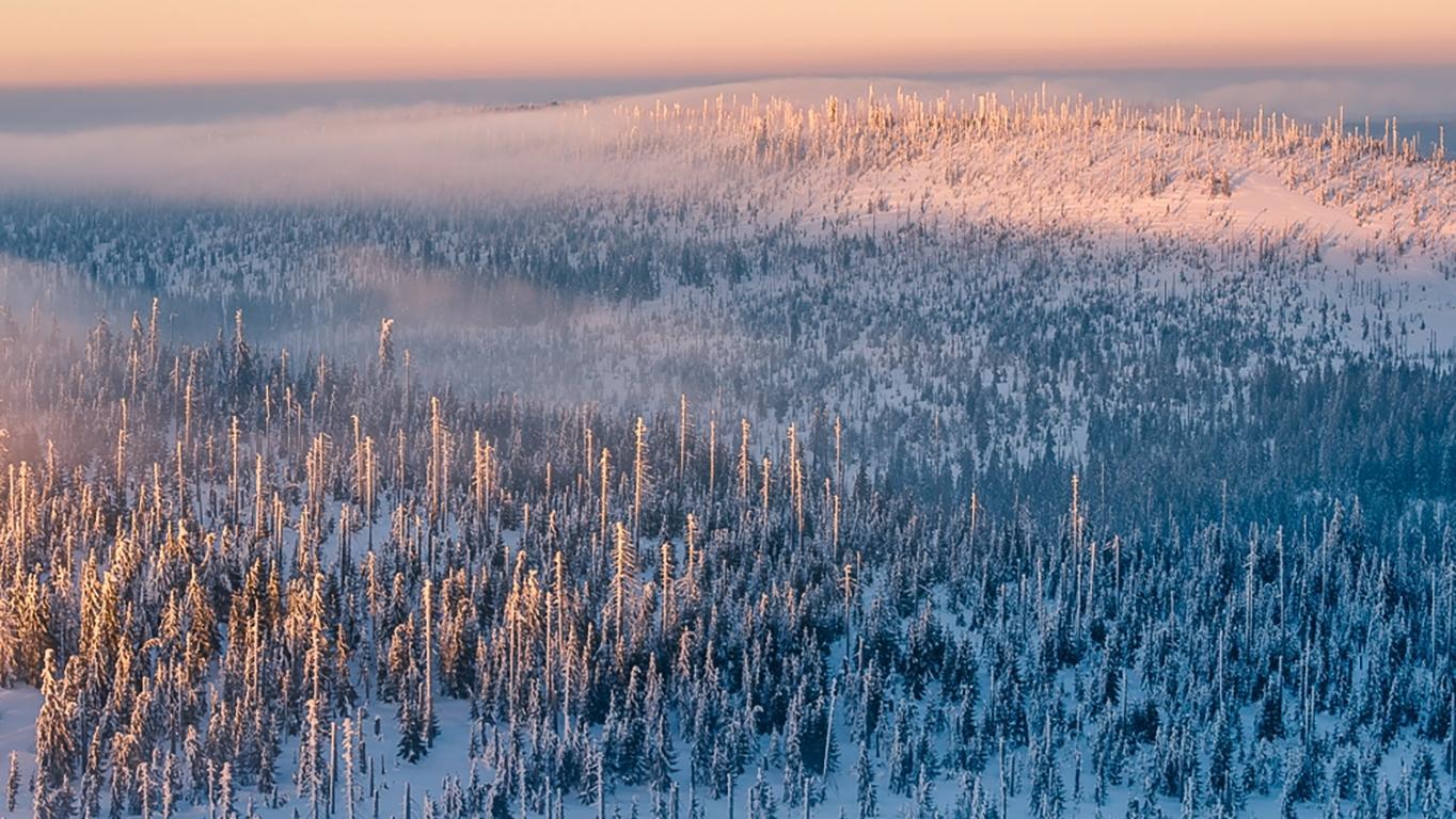 Die Lage im Bayerischen Wald entspannt sich: Im Bereich des Lusen beispielsweise sind die markierten Hauptwanderwege weitgehend begehbar.
