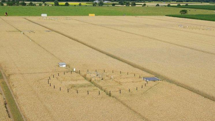 Auf einem Testfeld des Thünen-Instituts wird Getreide in einem abgesteckten Gebiet zusätzlich mit CO2 begast.