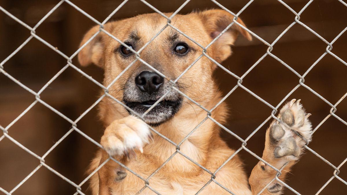 Hund hinter einem Maschendrahtzaun