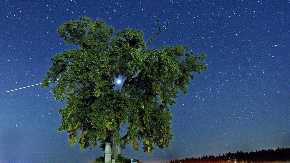 Sternenhimmel hinter einem grünen Baum