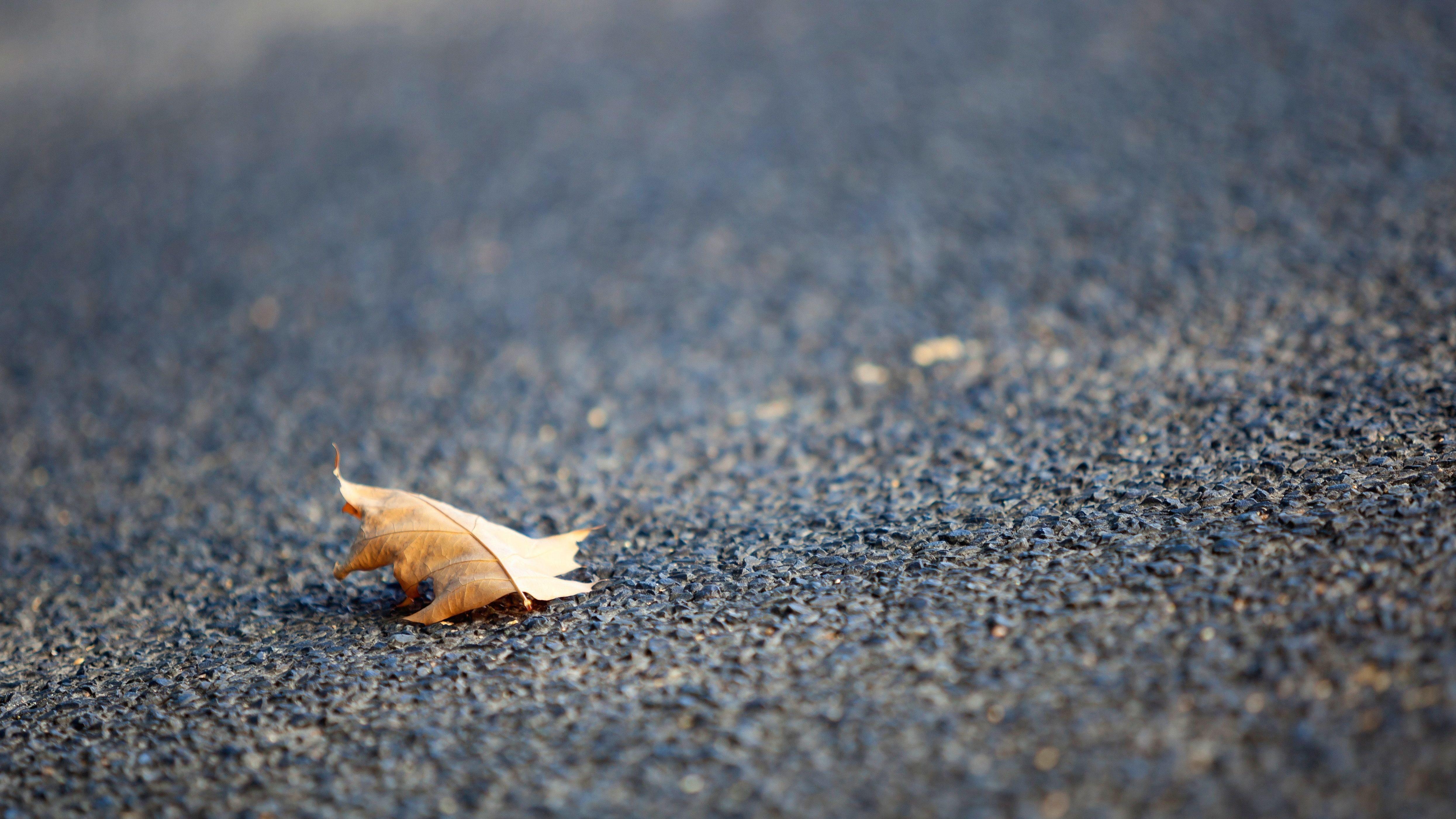 Herbstblatt auf der Straße