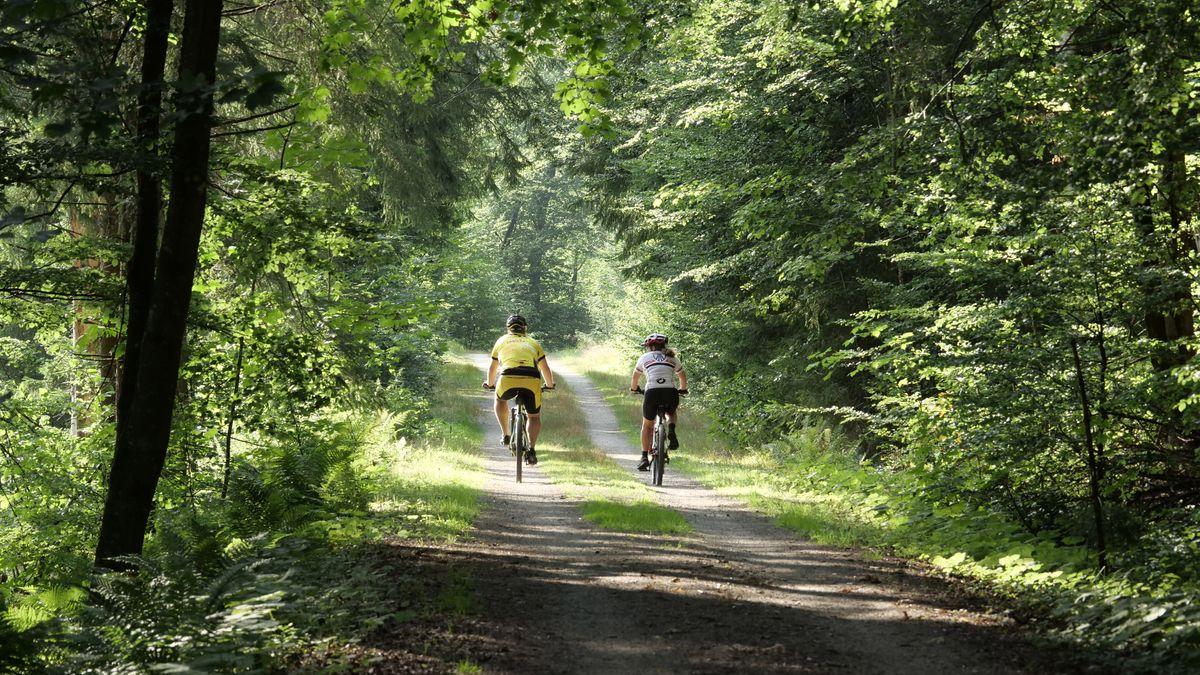Fahrradfahrer auf einem Waldweg