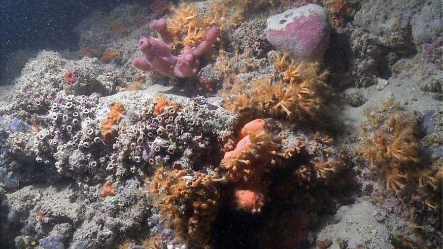 Korallenriff vor der Südostküste von Italien