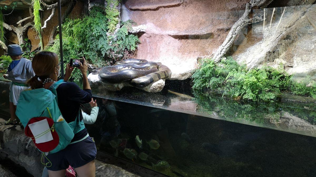 Eine Frau fotografiert eine große Schlange (Symbolbild)