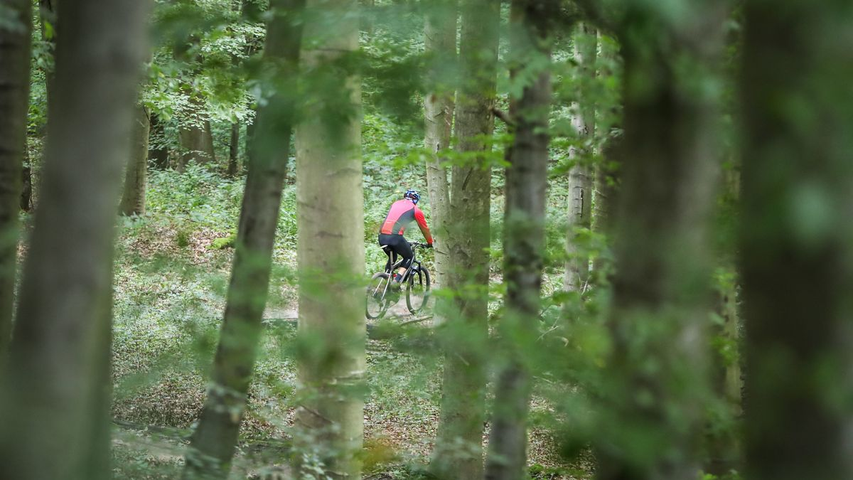 Symbolbild: Einige Mountainbiker nutzen illegale Trails