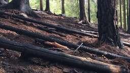 Abgebrannter Wald bei Hersbruck | Bild:BR-Studio Franken/Julia Demel