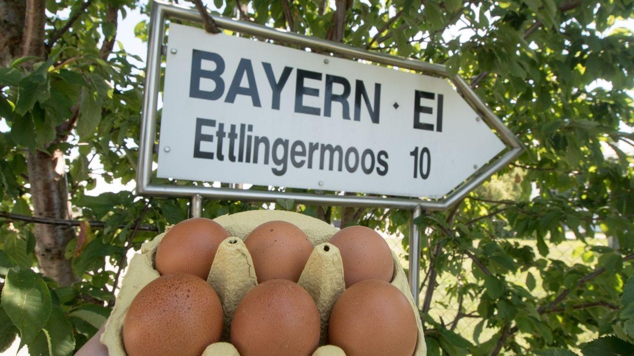 Bayern-Ei-Betriebsgelände