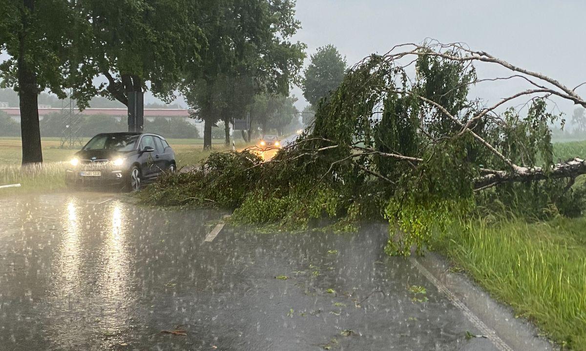 Umgestürzter Baum bei Chieming