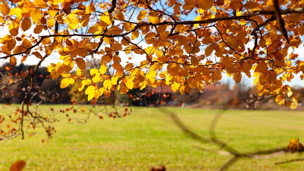 Archivbild: Bäume mit Herbstlaub in der Nähe von Münsing am Starnberger See.