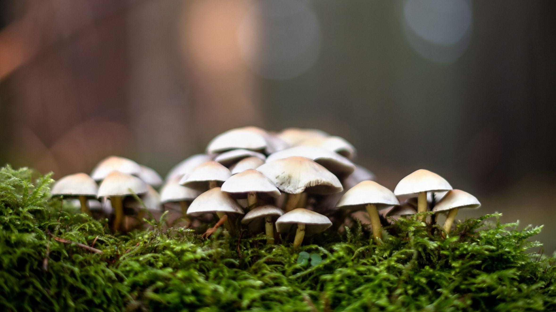 Pilze in einem Waldstück (Symbolbild)