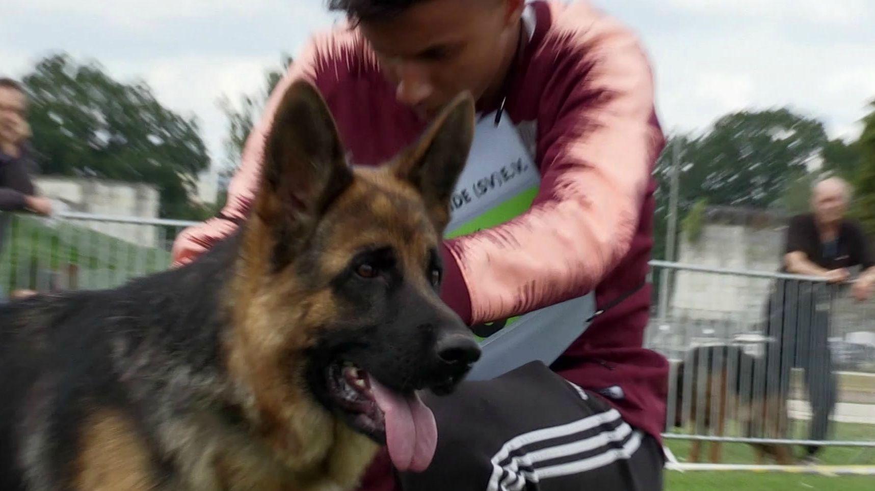 Schäferhund mit Halter im Max-Morlock-Stadion in Nürnberg