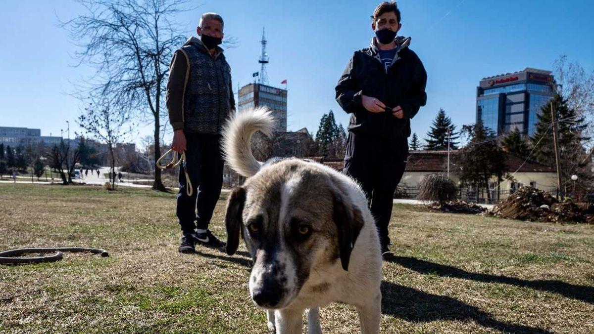 Im Bild ist zu sehen ist ein weißer Hund mit braunem Kopf, der in die Kamera schaut und die Tierschützer Mentor und Slavisa