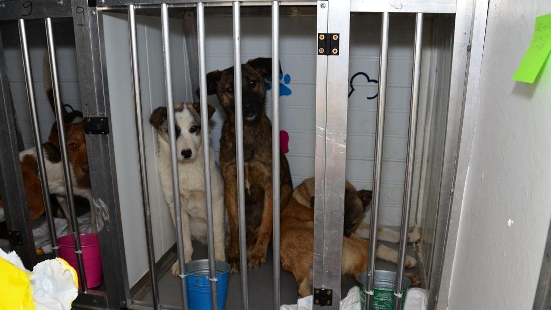 Hunde im Tiertransporter