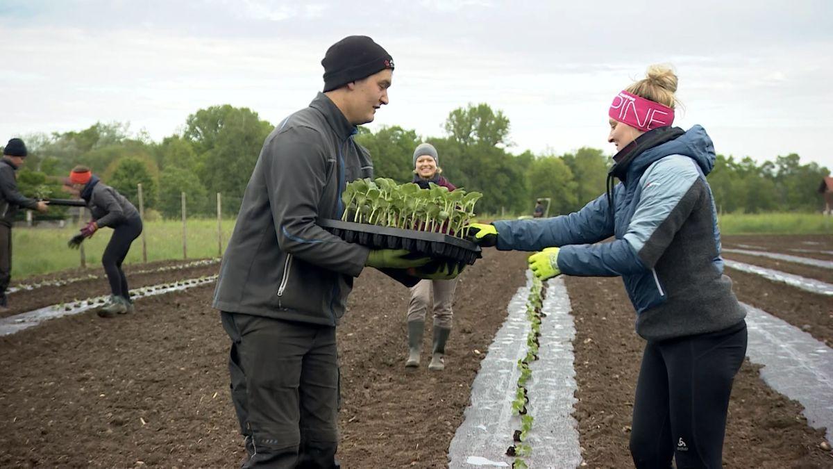 In Nußdorf im Inntal hat ein junger Landwirt über 5.000 kleine Wassermelonen-Pflänzchen eingesetzt