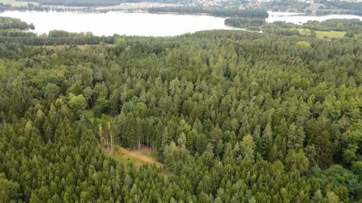 Waldgebiet am Brombachsee, in dem die Ferienanlage entstehen soll