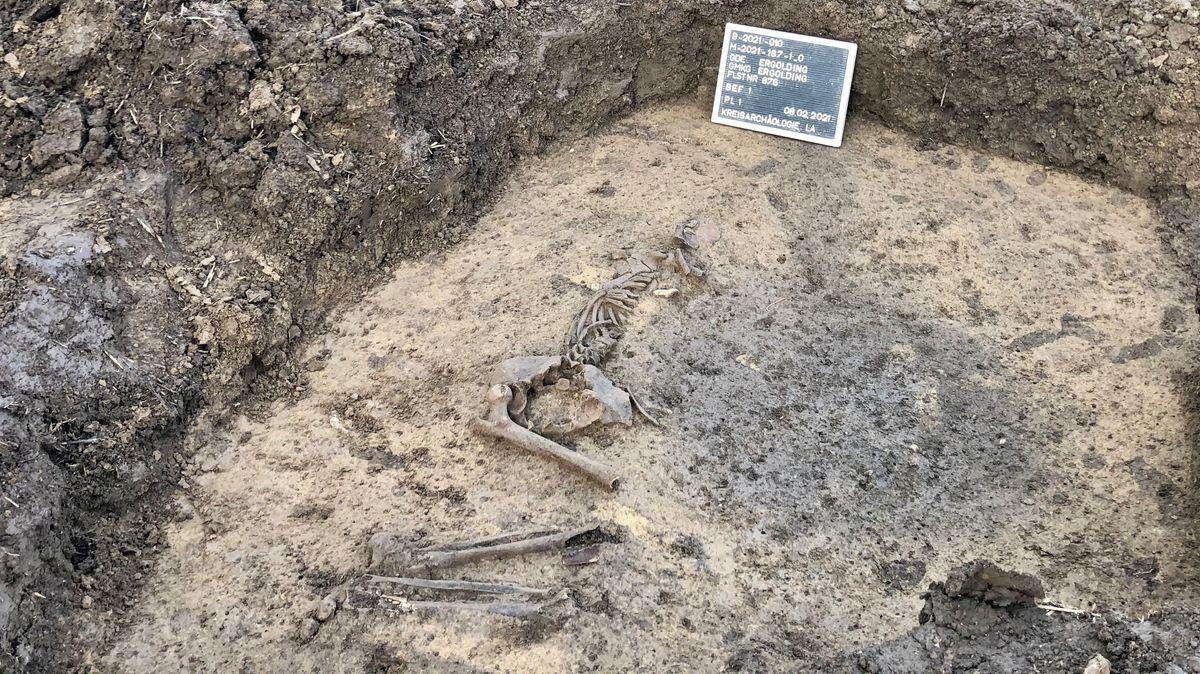 Ein Hobbyforscher hat in der Nähe von Ergolding ein vier- bis fünftausend Jahre altes menschliches Skelett gefunden.
