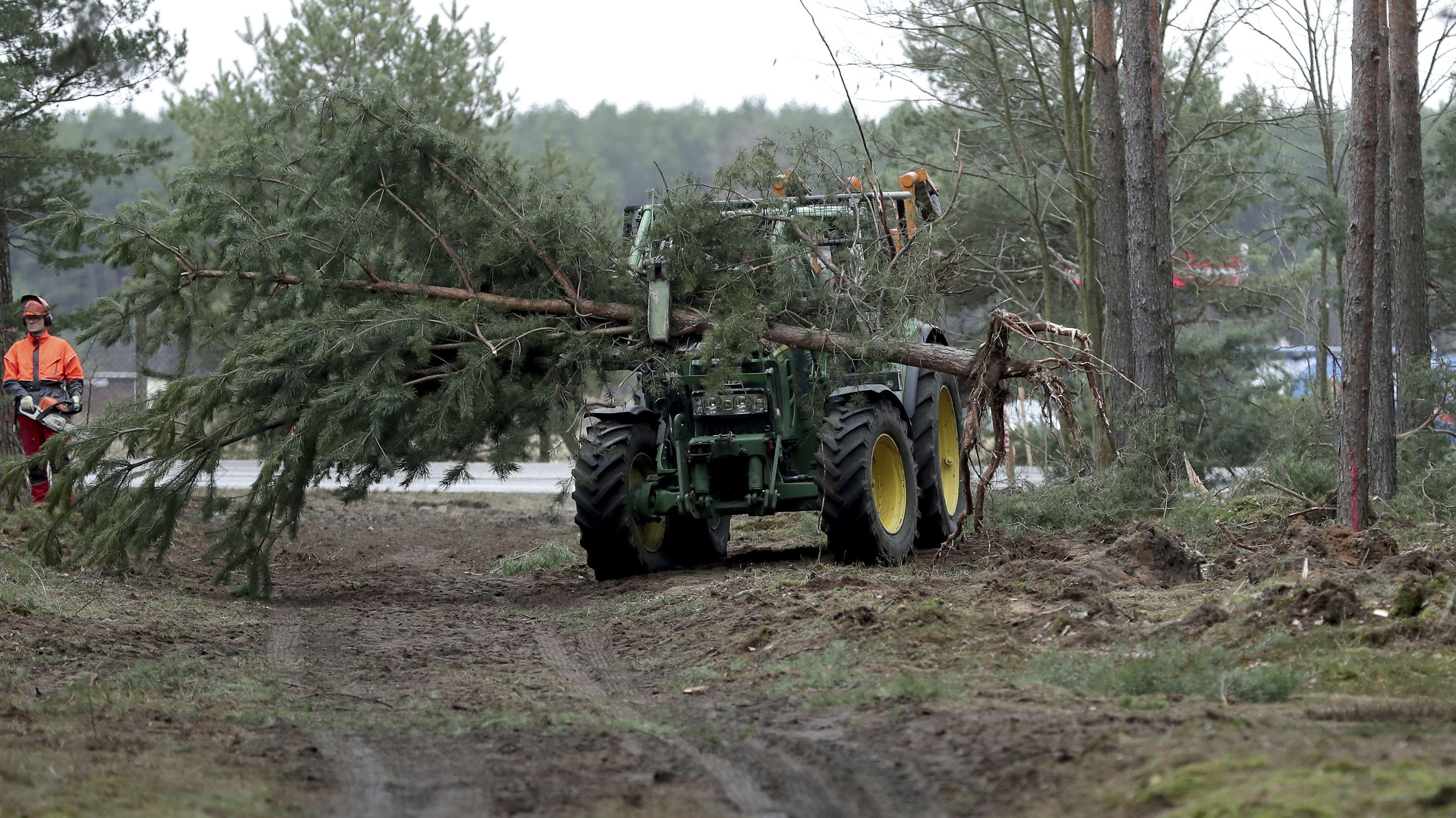 Ein Traktor transportiert gefällte Bäume auf einem Waldweg zwischen Bäumen.