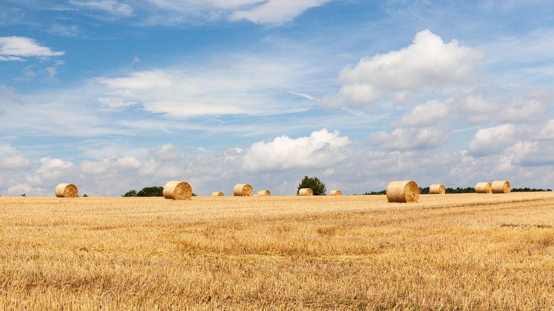 Strohballen auf gemähten Feldern in der Oberpfalz im Spätsommer