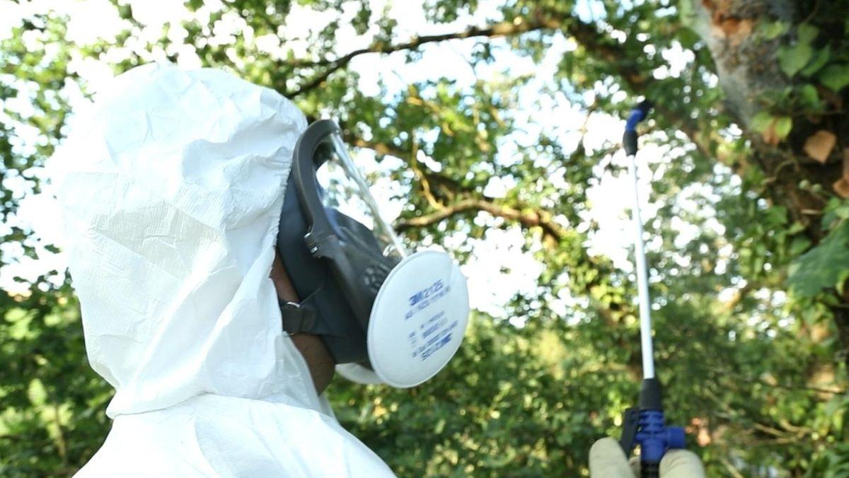 Eine Person im Schutzanzug bekämpft den Eichenprozessionsspinner mit chemischen Mitteln