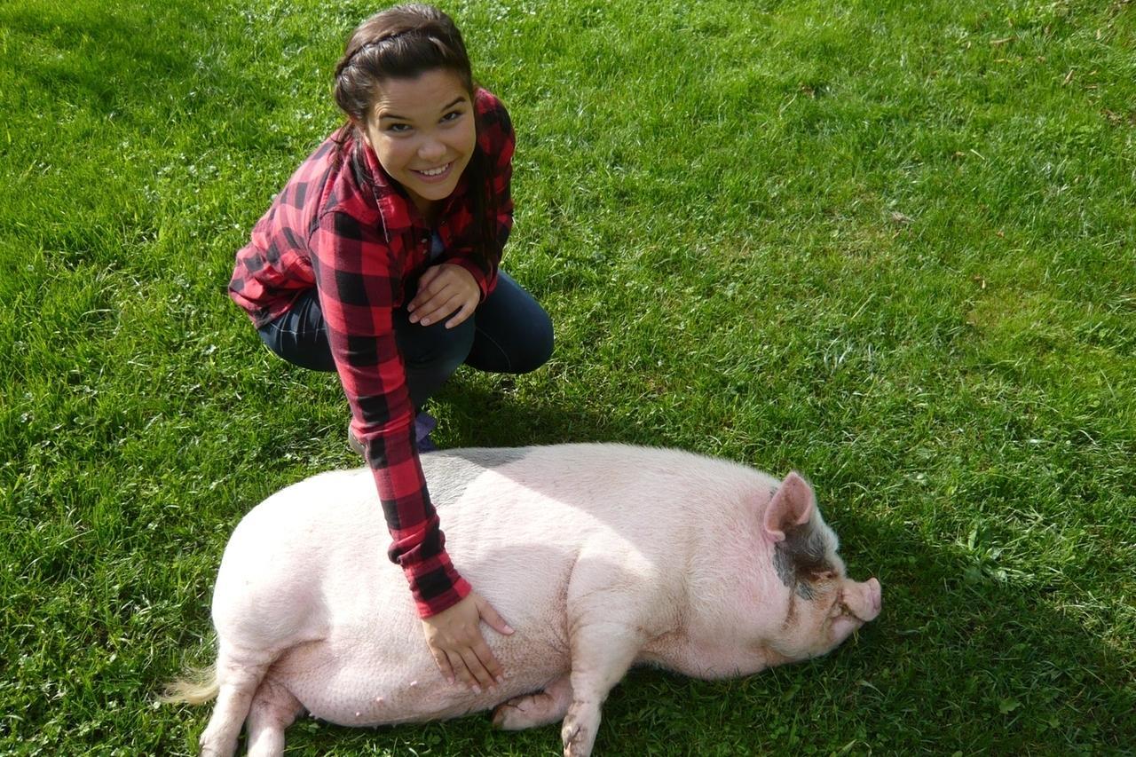 Anna Und Die Haustiere Minischwein