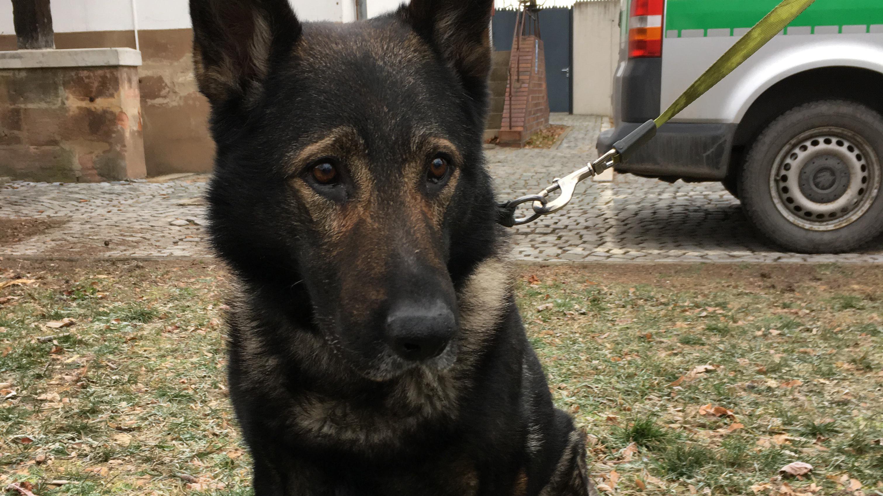 """Polizeihund """"Ivo"""""""