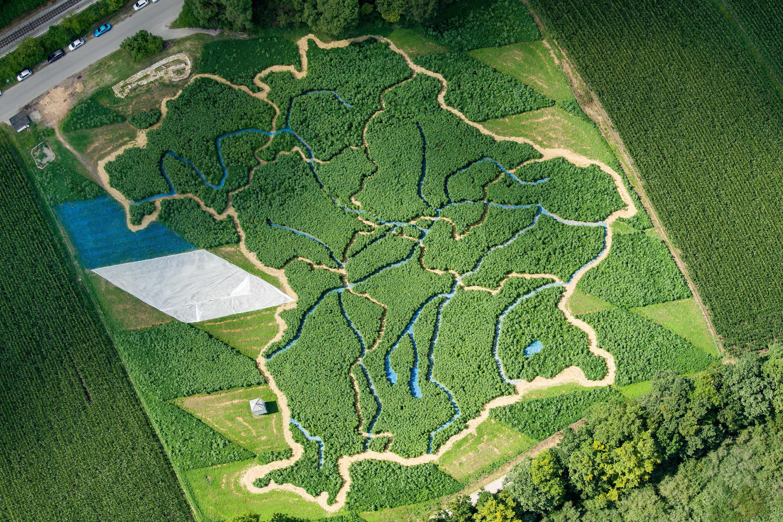 Labyrinth im Maisfeld von oben