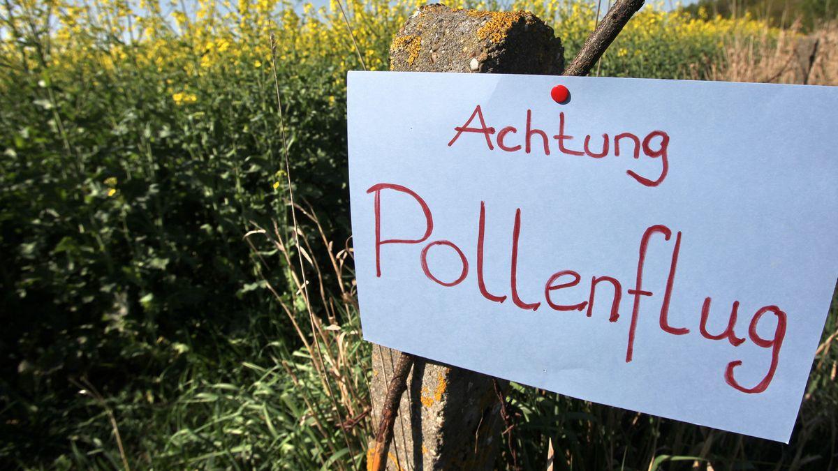 """Illustration zum Thema Allergien, Pollenallergie bzw. Heuschnupfen: Ein Schild mit der Aufschrift """"Achtung Pollenflug""""."""