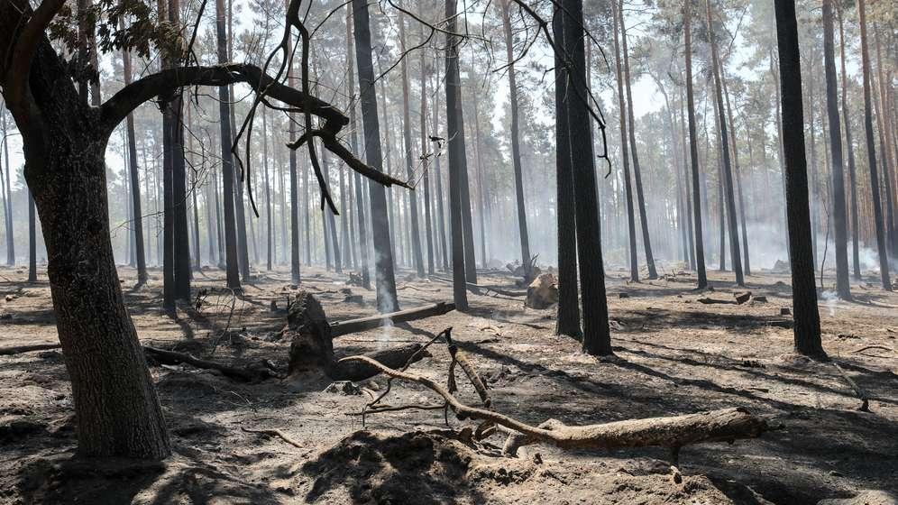 Trockenheit: Wetterexperten warnen vor Dürresommer | Bild:Jan Woitas/ZB/dpa