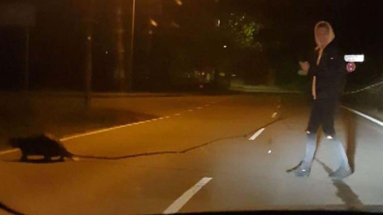 Ein Mann hilft einem Biber dabei, einen Ast über die Straße zu tragen. Das Video davon ging viral.