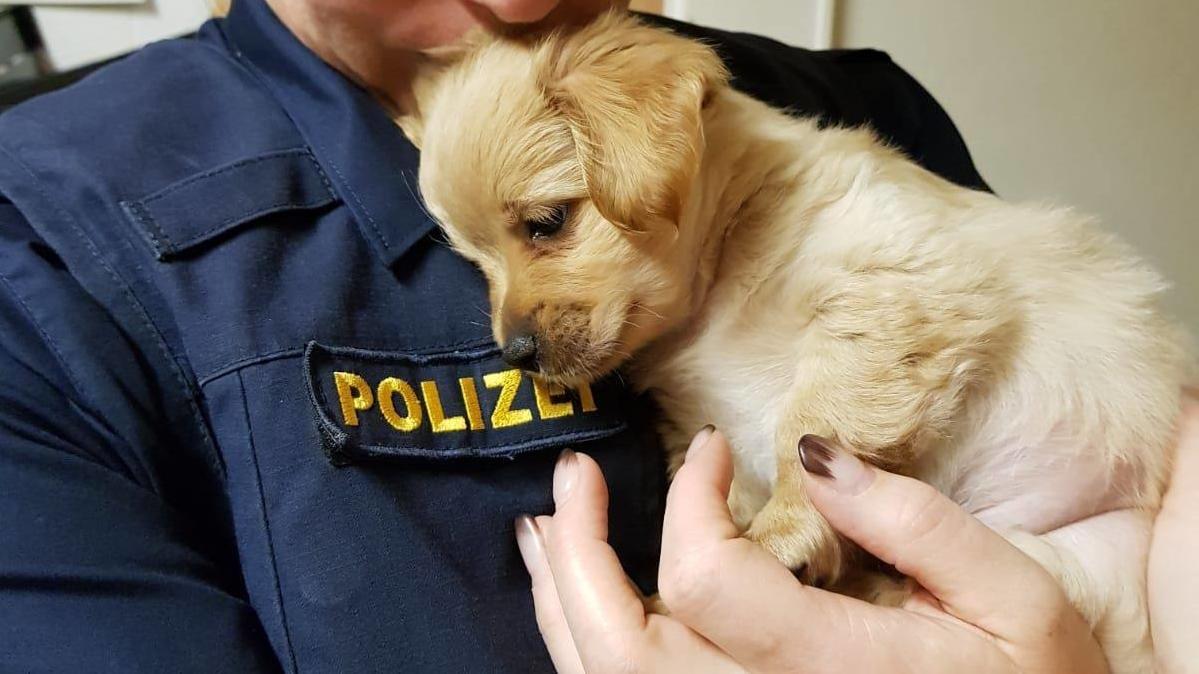 Das Hundebaby in der Obhut der Polizei in Sendling