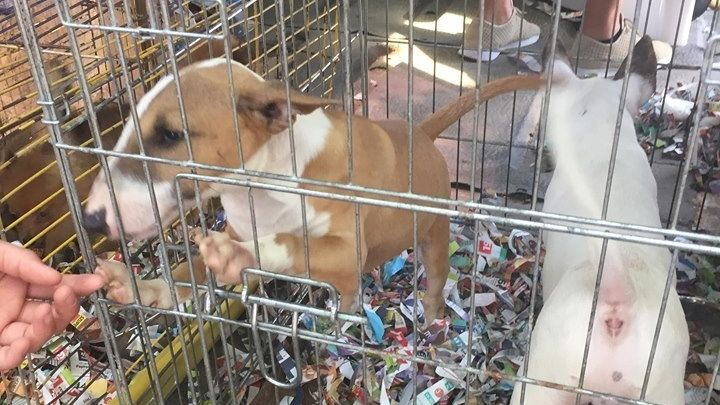 Bilder von einem Tiermarkt in Ungarn