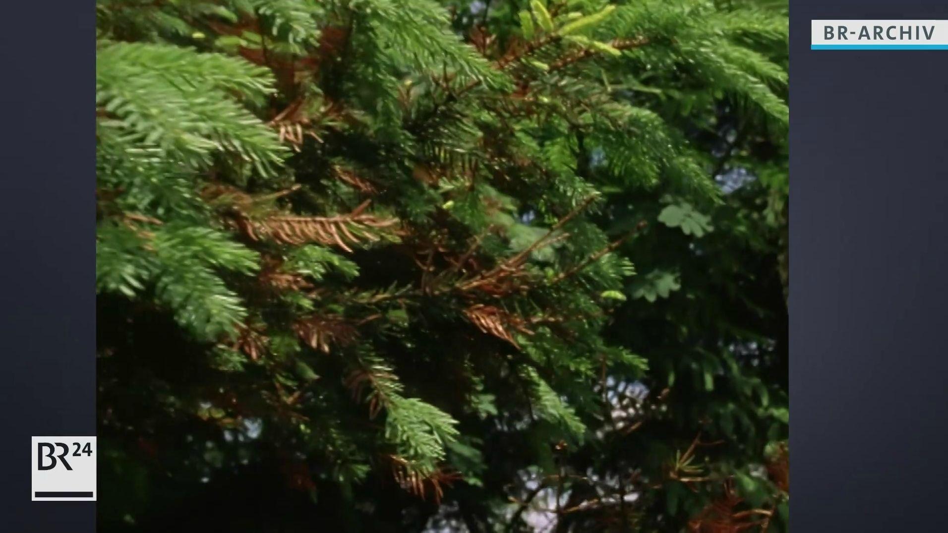Von Umweltgiften beschädigter Baum