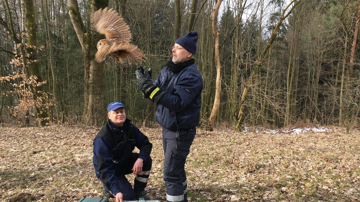 Tierrettung Bayreuth wildert Waldkäuze aus