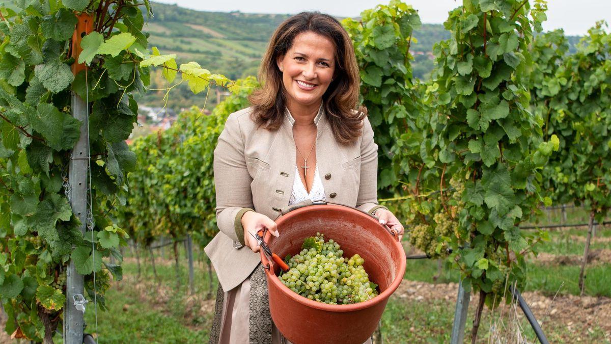 Start der Weinlese in Franken mit Landwirtschaftsministerin Michaela Kaniber (CSU)