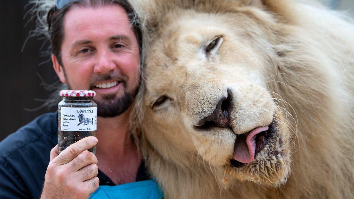 Martin Lacey, Löwen- und Tigerdompteur im Circus Krone, steht neben seinem Löwen King Tonga und hält dabei ein Glas mit Löwenkot in den Händen. Der Löwenkot soll zum Beispiel gegen Katzen im heimischen Garten und gegen Marder am Auto helfen.