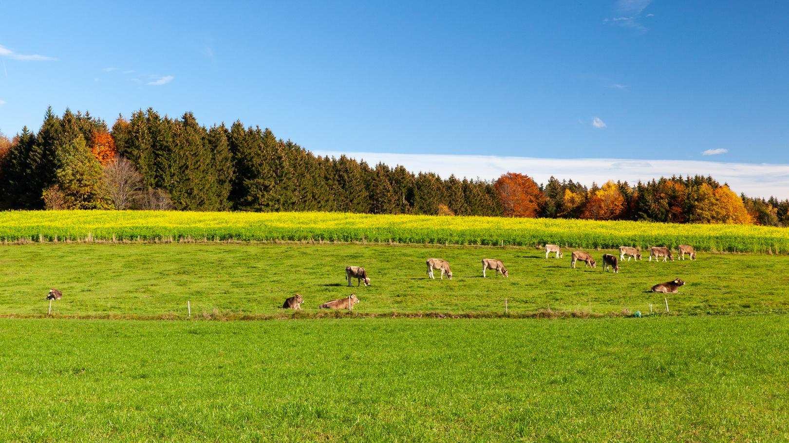 Über Viehwirtschaft, Gülle und Kunstdünger gelangt Nitrat ins Grundwasser