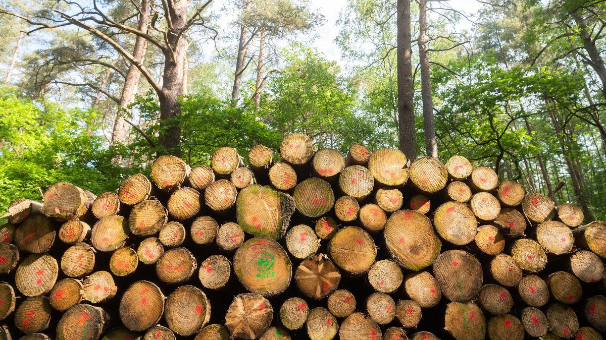 Holzstämme im Wald (Symbolbild)