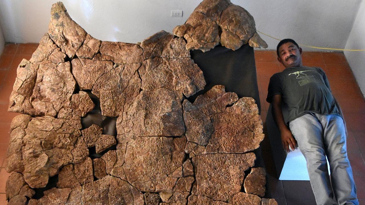 Der venezolanische Paläontologe Rodolfo Sánchez liegt neben dem Panzer eines Stupendemys geographicus-Männchens, der in acht Millionen Jahren alten Ablagerungen in Venezuela gefunden wurde.