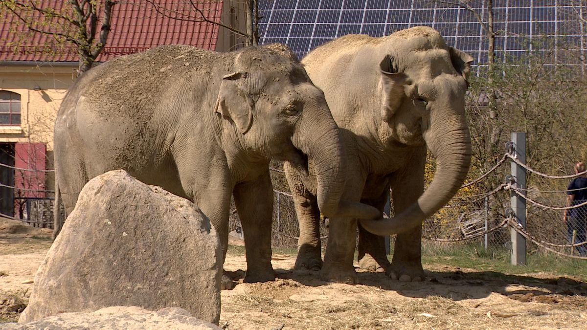 Elefanten im Augsburger Zoo.
