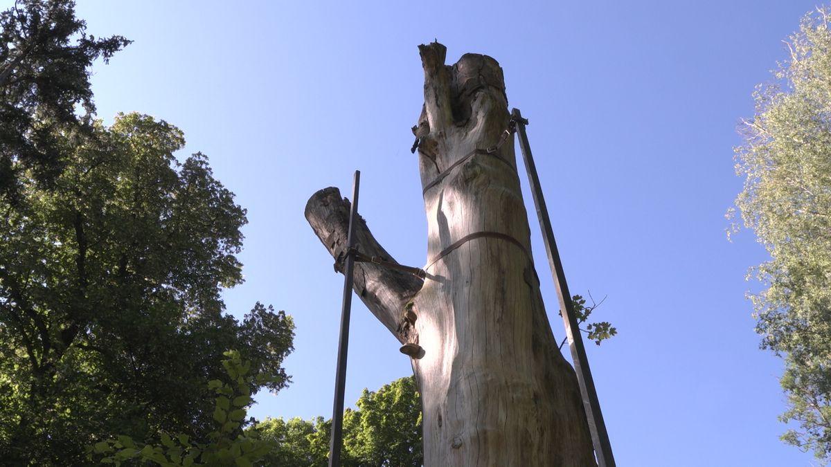 Der kahle Stamm eines alten Baumes wird von Carbonstangen gestützt, die in den Rotoren einer ausgedienten Windkraftanlage verbaut waren.