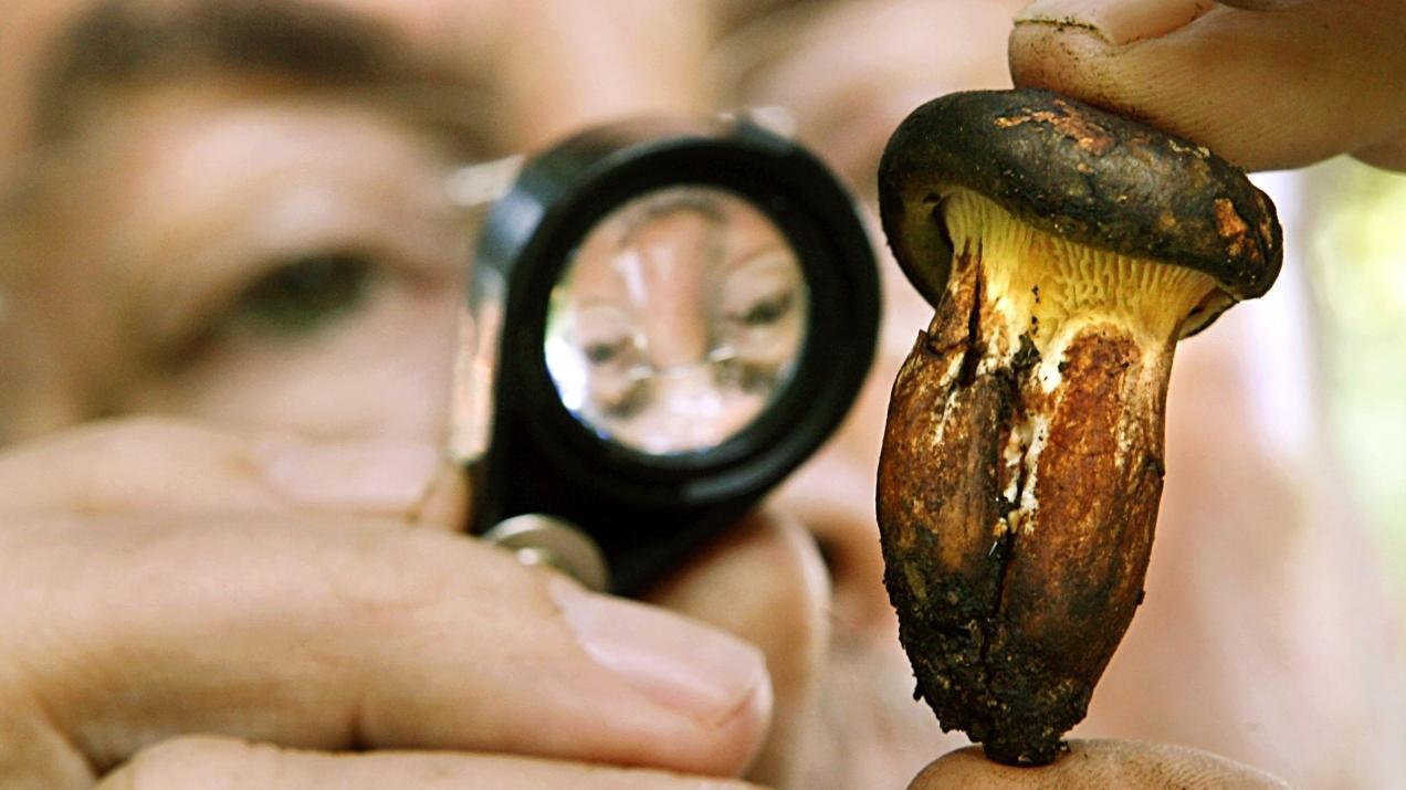 Pilz unter der Lupe