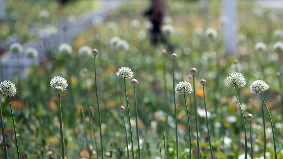 Planung für Landesgartenschau trotz Corona?