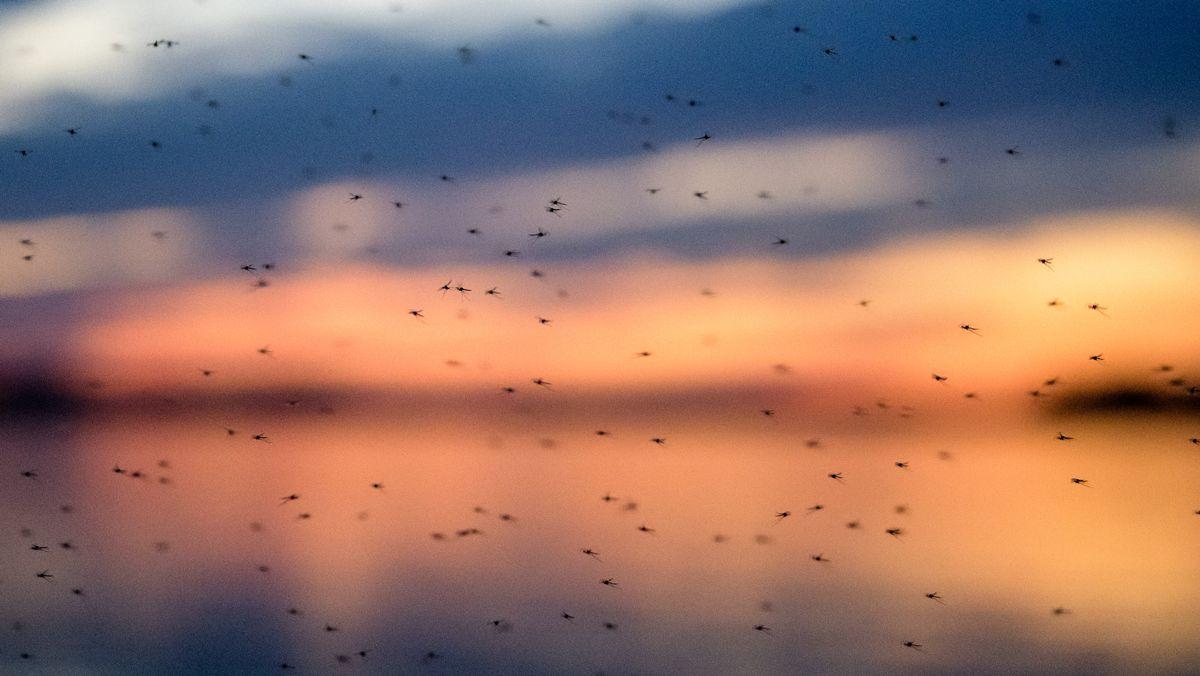 Mücken über dem Chiemsee